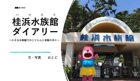 桂浜水族館の愛おしき日々! おとどちゃんエッセイ